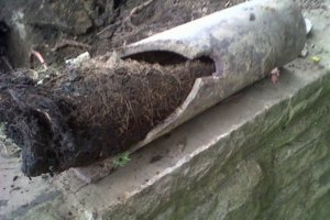 tree-roots-in-sewer-drain